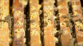 Bad weather brings honey shortage fears