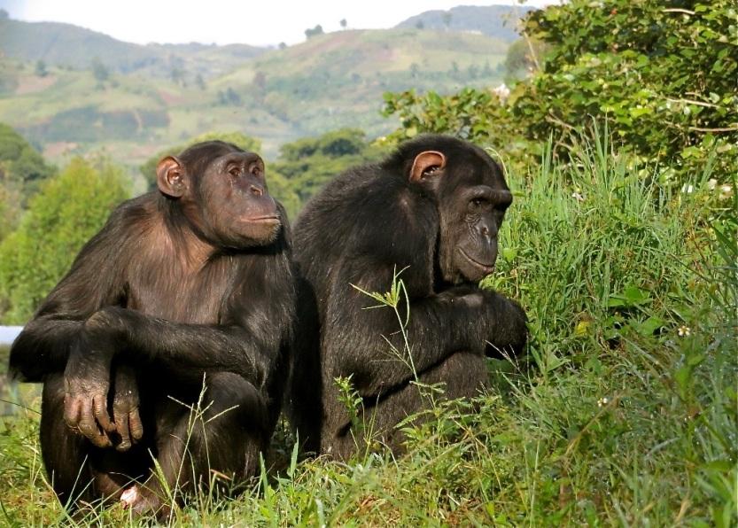 Photo: Lwiro Primates
